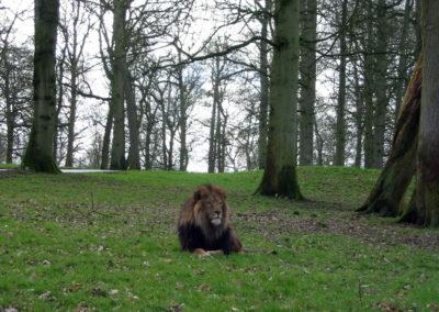 Longleat Safari Park - lew