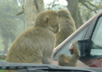 Longleat Safari Park - zmasowany atak