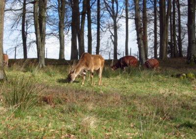 Longleat Safari Park - zwierza