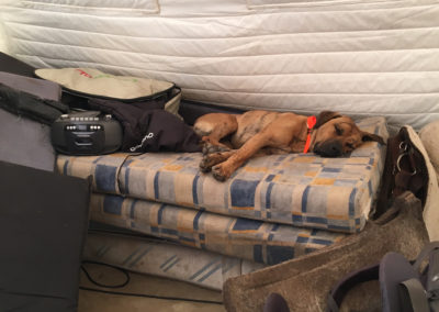 Pies w Refuge Asinau ma wszystko gdzieś.