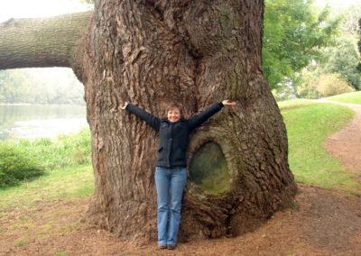 Potężne drzewo w parku w Blenheim Palace