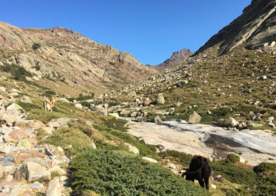 Pierwsze krowie zadki w górach.