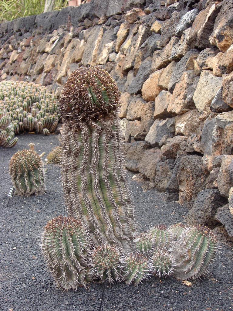 Guatiza i ogród kaktusiany